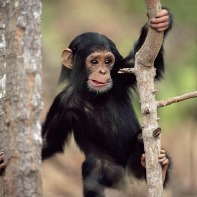 Тлумачення сновидінь. До чого сниться мавпа
