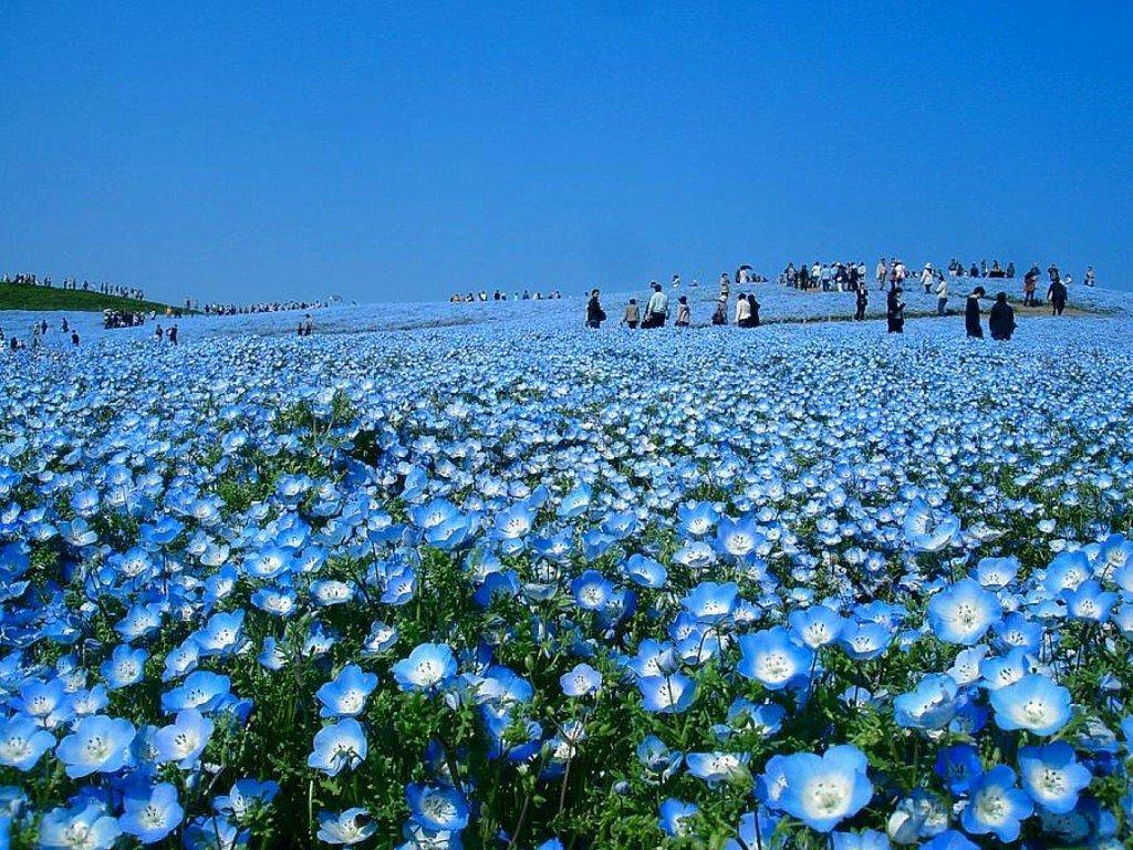 Приморський парк хітачі. Японія