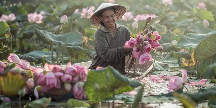 Найкрасивіший і рідкісний лотос. Лотос-божественна квітка або підступний бурян