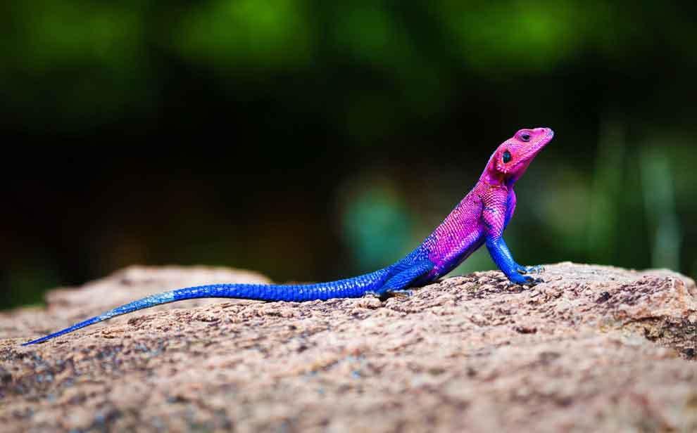 Фізіологія тварин. Пристосування і середовище-шмідт-ніельсен до
