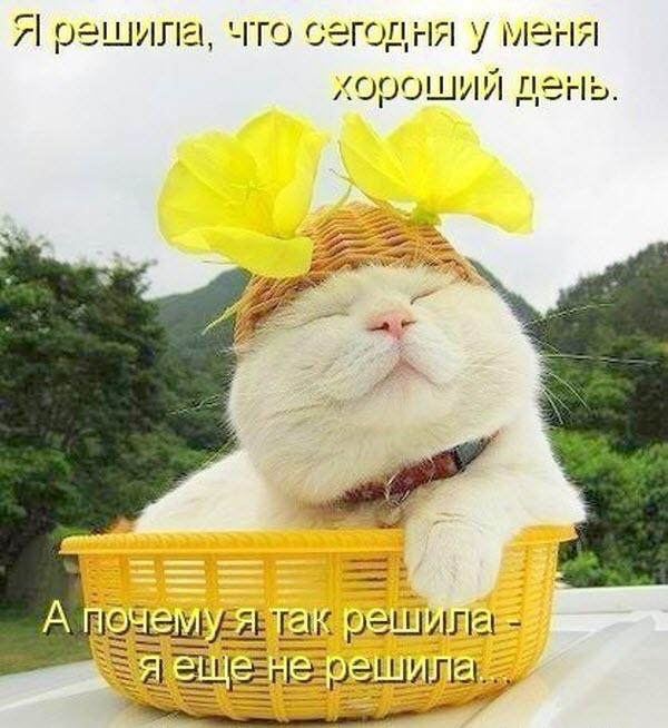 Завантажити листівку я тобі бажаю гарного дня. Прикольні картинки з побажаннями гарного і відмінного настрою