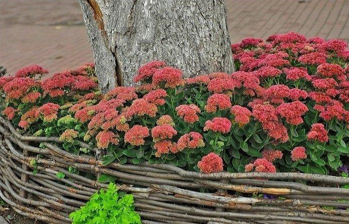 Який створити квітник під деревами. Клумба під яблунею схема садової клумби навколо дерева