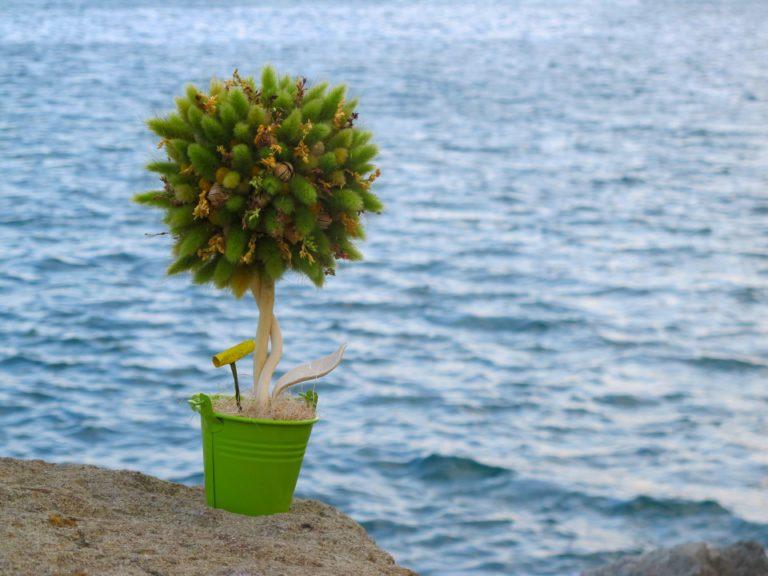 Топиарий з ялівцю своїми руками. Топиарий для саду: особливості фігурної стрижки топиарных рослин