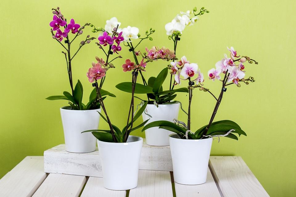 Подарував орхідею що значить. Що приверне в будинок орхідея: народні прикмети і забобони