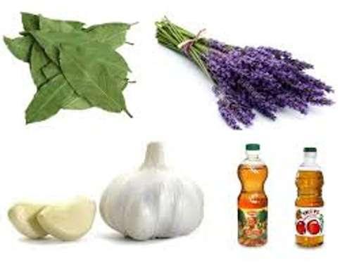 Як витравити харчову моль. Зернова або харчова моль: як позбутися від личинок і дорослих особин і ліквідувати джерело зараження
