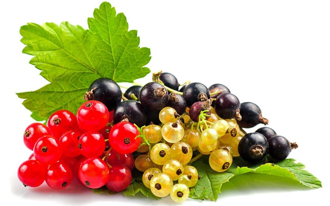 Ягоди для дітей дитячого садка. Конспект заняття з ознайомлення з навколишнім світом в старшій групі  лісові та садові ягоди