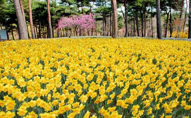 Квіткові поля в японії: природна палітра бутонів. Парк хітачі-сісайд (hitachi seaside park) хітатінака, префектура ібаракі, японія опис парку хітачі