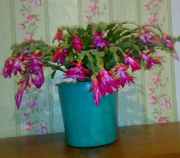 Квіти для благополуччя і щастя в будинку. Квіти в будинку: прикмети і забобони про кімнатних рослинах