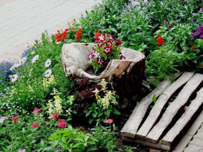Використання декоративних дерев на дачі. Кращі декоративні дерева і чагарники для саду