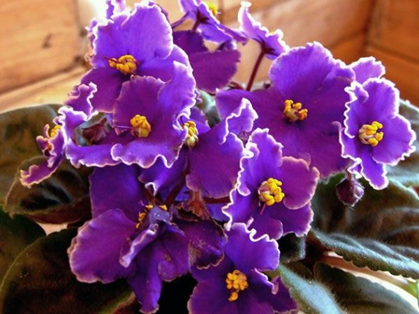 Назва квітів і рослин. Каталог кімнатних рослин