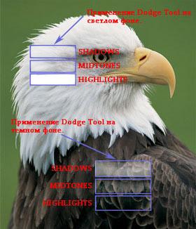Як користуватися губкою в фотошопі cc. Інструменти тонування