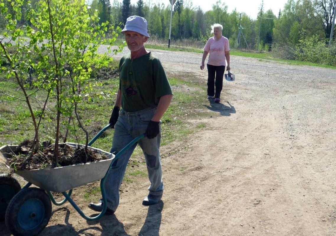 Як правильно посадити берізку навесні. Особливості догляду за березою, вирощування на ділянці