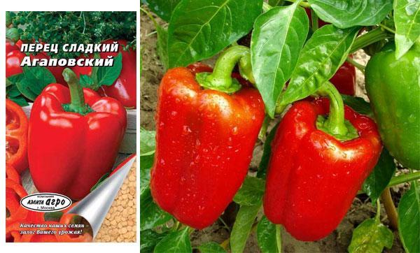 Суперранні сорти перцю. Огляд найбільш врожайних сортів перцю: вибираємо ранні, середньоранні та пізні сорти для посадки