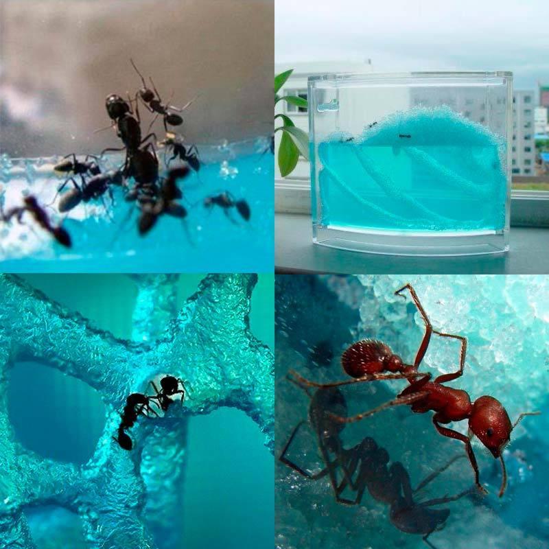 Як утримувати мурах в мурашиної фермі. Мурашина ферма (формікарій)